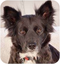 Border Collie Mix Dog for adoption in Nashville, Tennessee - Esther
