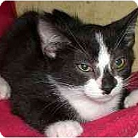 Adopt A Pet :: Hummer - Lombard, IL