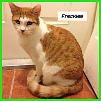 Adopt A Pet :: Freckles - Miami, FL