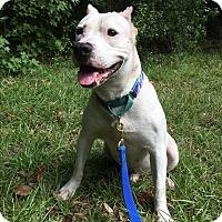 Adopt A Pet :: TRIPP - Okatie, SC
