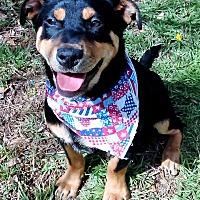 Adopt A Pet :: Harrison - Vernon, TX