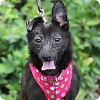 Adopt A Pet :: Jackie - Vista, CA