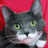 Adopt A Pet :: Syrin - Renfrew, PA