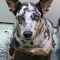 Adopt A Pet :: Mellie - Sarasota, FL