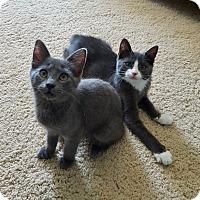 Adopt A Pet :: Diamond and Dexter - Colmar, PA