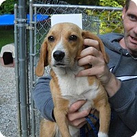 Adopt A Pet :: Daisy Mae - Rexford, NY