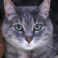 Adopt A Pet :: Monkey - Hastings, MN