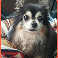 Adopt A Pet :: Bandit - Taunton, MA