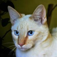 Adopt A Pet :: Blizzard - Hastings, NE