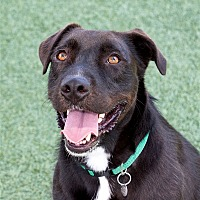 Adopt A Pet :: Ernie - San Luis Obispo, CA