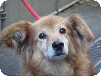 Collie Mix Dog for adoption in Long Beach, New York - Kayla
