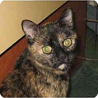 Adopt A Pet :: Cora - Jenkintown, PA