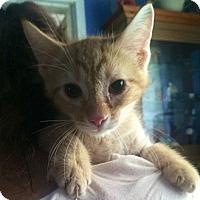 Adopt A Pet :: Wink - Cerritos, CA