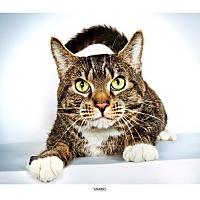 Adopt A Pet :: Mambo - New York, NY