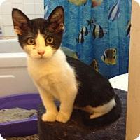 Adopt A Pet :: Pecan - Santa Rosa, CA