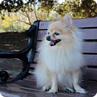 Adopt A Pet :: Uilani - Rancho Palos Verdes, CA