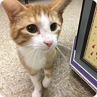 Adopt A Pet :: Milo - Medina, OH