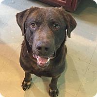 Adopt A Pet :: Roscoe - Russellville, KY