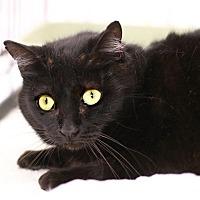 Adopt A Pet :: Petunia - Westchester, CA