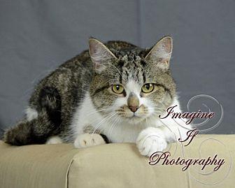 Domestic Mediumhair Cat for adoption in Crescent, Oklahoma - Hannah