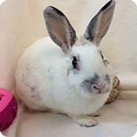 Adopt A Pet :: Leticia - Paramount, CA