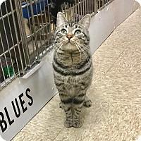 Adopt A Pet :: Frank - Colmar, PA