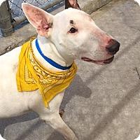 Adopt A Pet :: Troy - Houston, TX