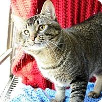 Adopt A Pet :: Manu - Midland, TX
