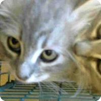 Adopt A Pet :: A714813 - Sacramento, CA