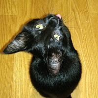 Adopt A Pet :: Julia - Columbus, OH