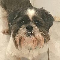 Adopt A Pet :: Mackinaw - House Springs, MO