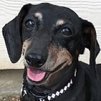 Adopt A Pet :: Maggie Millstone - Houston, TX