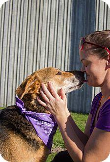 Shepherd (Unknown Type) Mix Dog for adoption in Longview, Washington - 139937 (Hope)