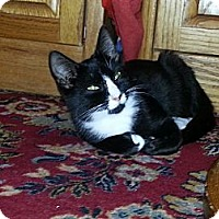 Adopt A Pet :: Tex - Richmond, VA