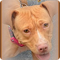 Adopt A Pet :: Ruby - Miami, FL