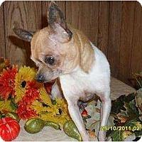 Adopt A Pet :: Bunky - Chandlersville, OH