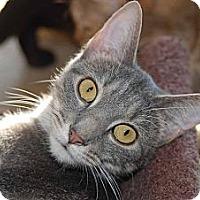 Adopt A Pet :: Sylvia - New Port Richey, FL