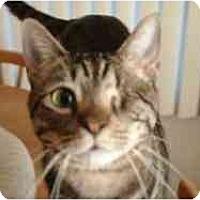 Adopt A Pet :: Onion - Pasadena, CA