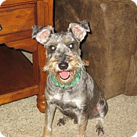 Adopt A Pet :: Fred - Springfield, MO