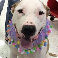 Adopt A Pet :: Mr. Parker - Raritan, NJ
