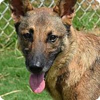 Adopt A Pet :: Carmen - Athens, GA