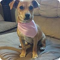 Adopt A Pet :: Zoe - San Diego, CA