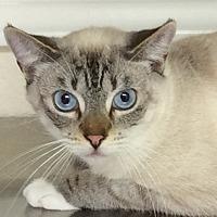 Adopt A Pet :: Snowball - Hollister, CA