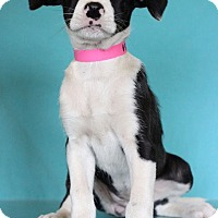 Adopt A Pet :: Lisa - Waldorf, MD