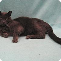 Adopt A Pet :: Mystic - Redwood Falls, MN