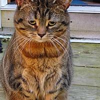 Adopt A Pet :: Su - Duncan, BC