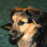 Adopt A Pet :: Gypsy - Oxford, WI