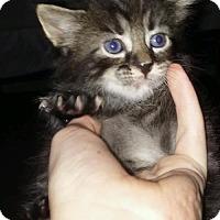 Adopt A Pet :: Atlas - Melbourne, FL