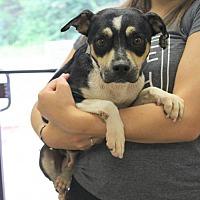 Adopt A Pet :: Lakota - Mocksville, NC