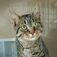 Adopt A Pet :: Dalton - Marshfield, WI